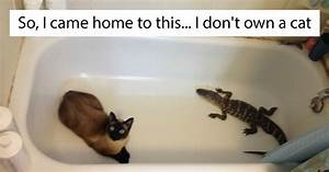 """10+ Of The Best """"I Don't Own A Cat"""" Moments That Have Ever"""