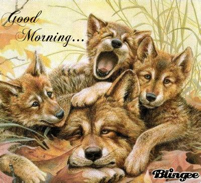 sleeping morning wolf family gif pictures