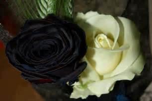 Black and White Rose Flower
