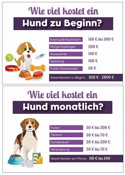 Viel Kostet Wie Ein Hund Kosten Hunde