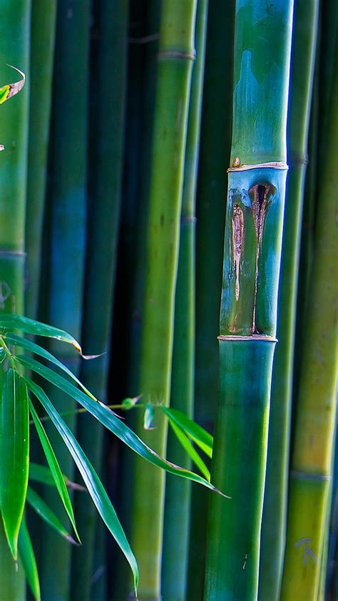 green bamboo lines iphone  wallpaper hd