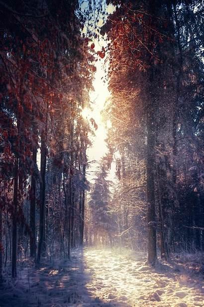 Portrait Nature Display Forest Natural Wallpapers Desktop