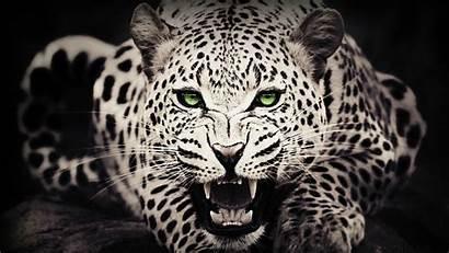 Leopard Wallpapers Desktop Background Pc Abstract Wild