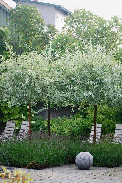 olive garden bend oregon 62 best central oregon plant tree ideas images on