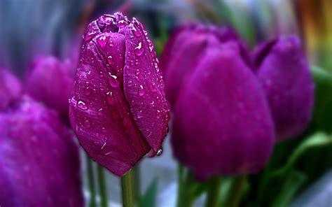 Pink, Beautiful, Flowers, Amazing, Water Drop, Bokeh
