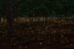 A Firefly Festival To Light Up You Summer Nights ...