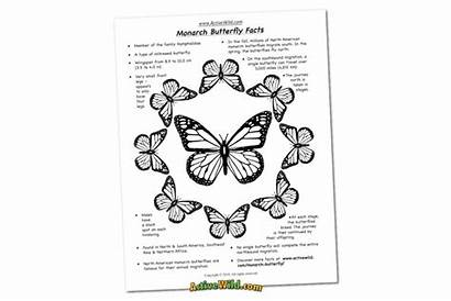 Monarch Butterfly Coloring Facts Sheet Fact Migration