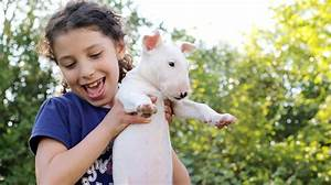 11 best dogs for kids that they'll actually want to help ...