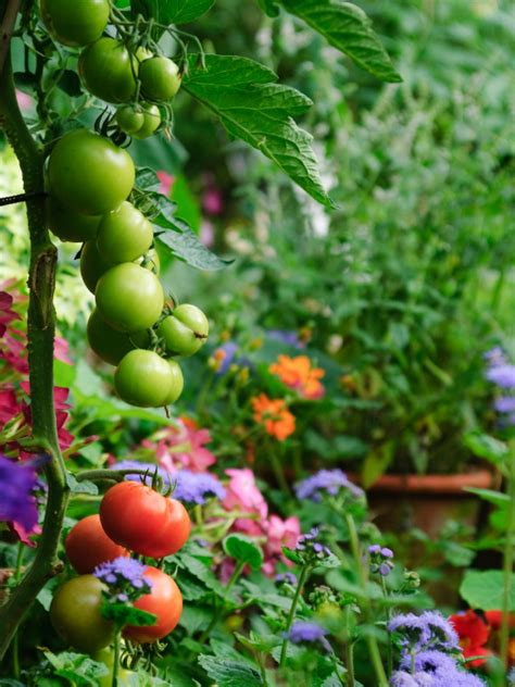 fruits garden pictures edible landscaping growing your own food hgtv