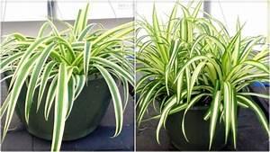 Pflegeleichte Pflanzen Für Die Wohnung : beliebte zimmerpflanzen sch ne pflegeleichte gr npflanzen ~ Michelbontemps.com Haus und Dekorationen