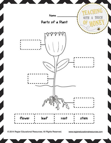 science worksheets plants grade 2 inspirationa parts plant