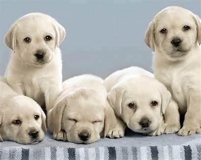 Dog Resolution 1080p