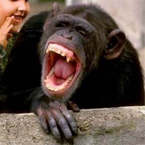 Animals Laughin... Laughing