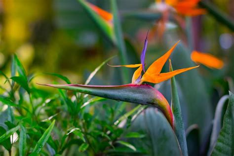 paint ideas for small bathroom how to grow strelitzia bird of paradise