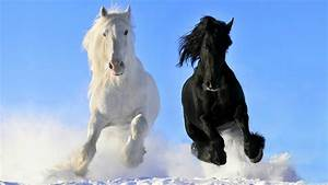 Black Horses HD Wallpapers – Horse Desktop Wallpapers | HD ...