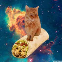 space cats animated gifs of cats floating amongst galaxies