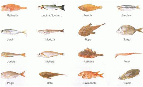 cuisiner la daurade poissons de la mer méditerranée en espagne catalogue avec