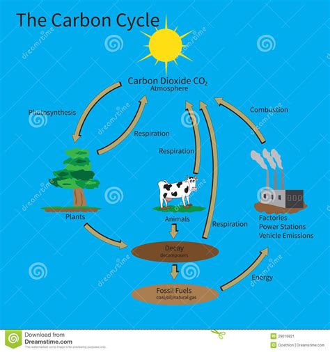 The Carbon Cycle Stock Vector Illustration Of Fuel