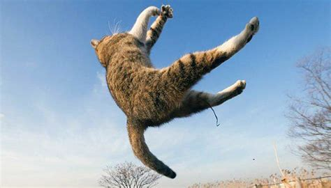 uccelli non volanti gatti volanti