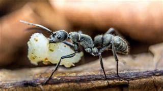 rid  ants  vegetable garden