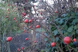 Gartenarbeit Im Februar : gartenarbeit im januar und februar tipps f r den winter ~ Frokenaadalensverden.com Haus und Dekorationen