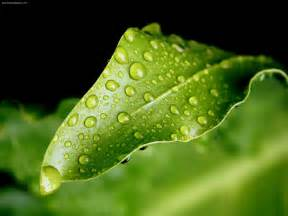 From the heart of Kandarp: Dew Drops or Tears?