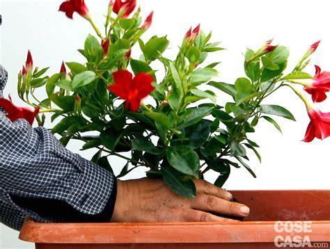 piante da davanzale fiori da balcone pieno sole con 10 fiori e piante da