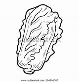 Cabbage Coloring Pechay Clipart Chinese Pages Wok Template Printable Getcolorings Sketch sketch template