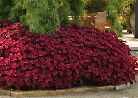 water features for the garden who needs flowers grow coleus for foliage garden