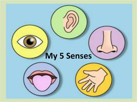 my 5 senses ppt by kayld teaching resources tes