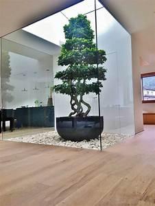 Tropische Pflanzen Kaufen : innenraumbegr nung schweiz baum pflanze kaufen indoor ~ Watch28wear.com Haus und Dekorationen