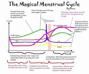 menstrual-cycle-hormones-diagram | Doula | Pinterest ...
