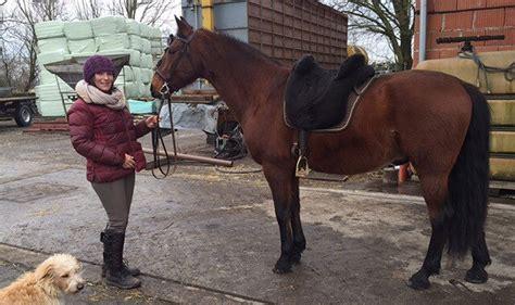 wiegt mein pferd gewicht pferd