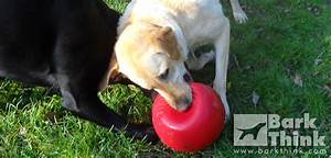 Best indestructible dog toys for chewers bark think for Best plush dog toys for aggressive chewers