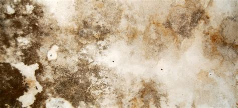 black mold symptoms    doityourselfcom