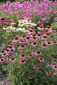 Pflanzen Pflegeleicht Garten : den garten pflegeleicht gestalten mein sch ner garten ~ Lizthompson.info Haus und Dekorationen