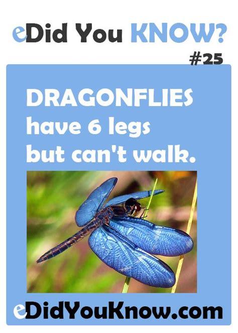 dragonflies   legs   walk httpedidyouknow