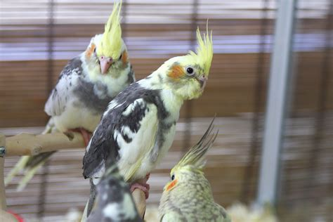 pet shop birds pictures to pin on pinterest pinsdaddy