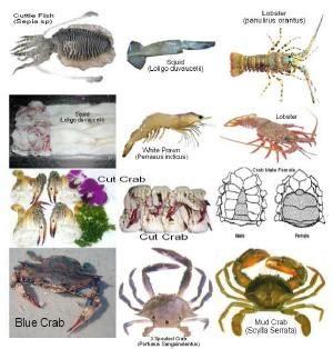 eu bans fish  pakistan good  bad
