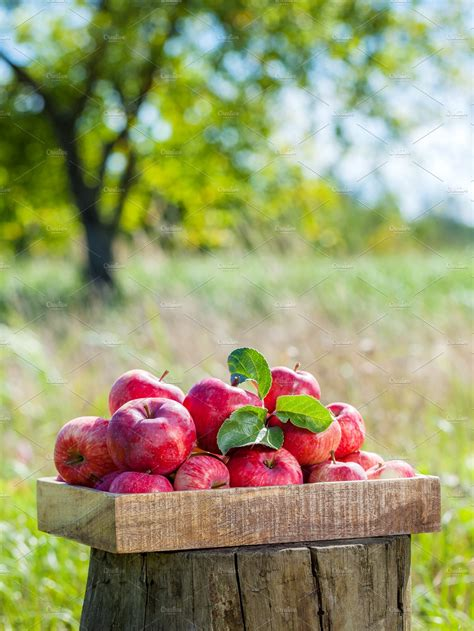 box  red apples  apple orchard food images