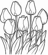 Flower Bed Drawing Garden Coloring Getdrawings sketch template