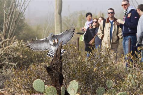 arizona sonora desert museum tucson attractions