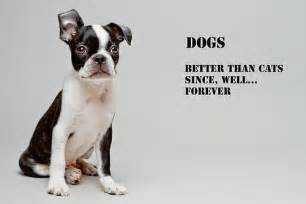 dogs are better than cats dogs flickr photo