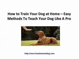 How to train your dog at home easy methods to teach your for How to train a dog at home