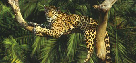 jaguar cat fantastic animals the world on my doorstep page 6