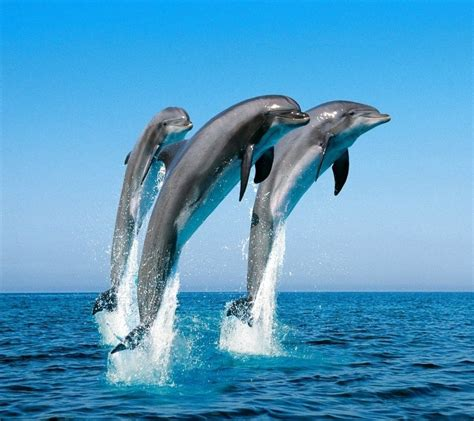 free cell phone wallpapers dolphin cell phone wallpapers for iphone 4s pin free dolphins underwater animated screensaver