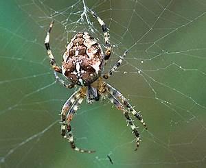 Spinnen Fernhalten Wohnung : spinne als fliegenf nger wohnung fliegen insekten ~ Whattoseeinmadrid.com Haus und Dekorationen