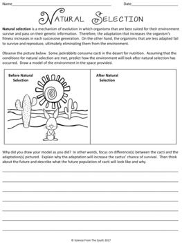 Natural Selection Worksheet For Review Or Assessment By Science From The South
