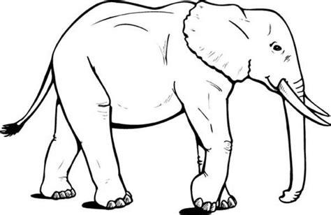 wild animal drawings google search animal silhouettes
