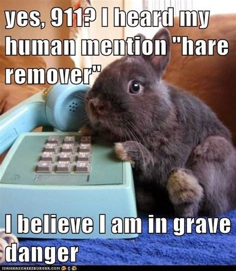 Silly Rabbit Meme - bunny humour page 4 forums at psych central